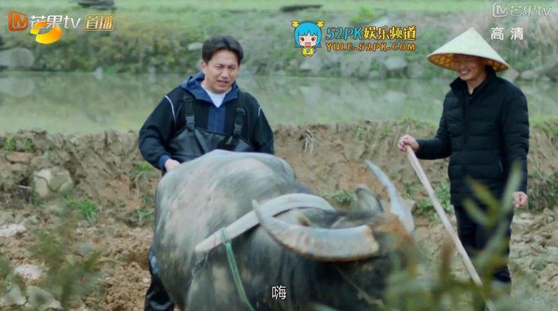 黄磊在耕牛